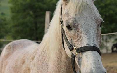 Seminar Führungskräfte Training mit Pferden Heimsoeth Academy
