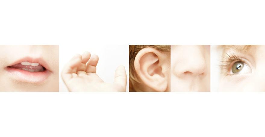 Wahrnehmungstypen und Repräsentationssysteme - Antje Heimsoeth